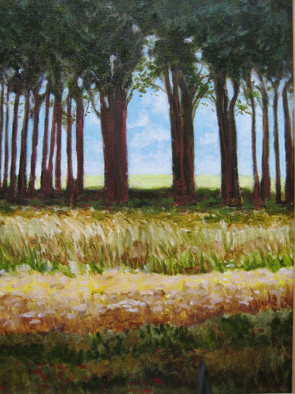 Licht tussen de bomen